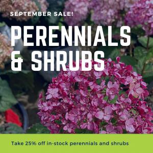 Perennials & Shrubs - 25% Off