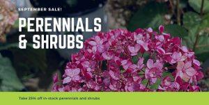 25% Off Perennials & Shrubs
